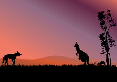 dingo: a dingo hunting kangaroos in the sunset