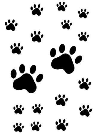 dingo: paw prints of an animal on white background