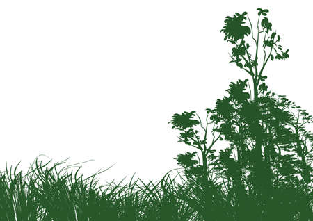 grass blade: trees and grass on white background with space