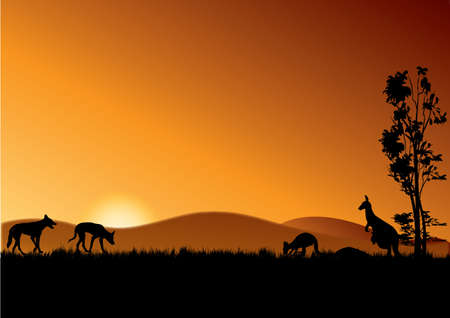 two dingos and kangaroos in the sunset