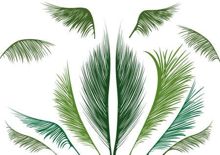 grünen tropischen Palmenblätter auf weißem Hintergrund