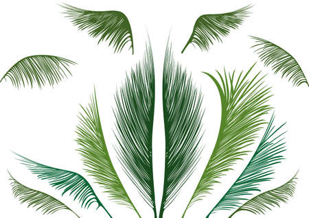 green tropical palm leaves on white background Vector