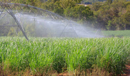 watering of young sugarcane in Australia