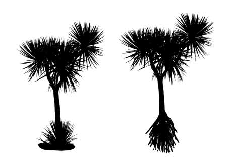 pandanus tree: two silhouette pandanus trees on white background Illustration
