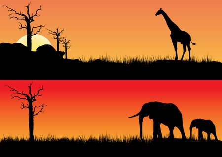tall grass: African sunset one with elephants other with a  giraffe Illustration