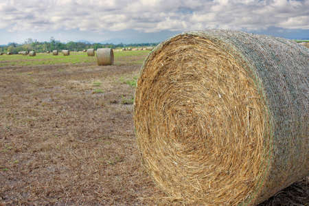 bale: close up of hay bale in the field on cloudy day