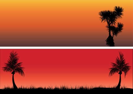 pandanus tree: coconut trees and pandanas in the sunset
