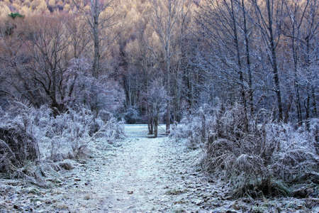 snow forest: Arrowtown in South Island of New Zealand in the park Stock Photo
