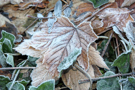icy leaves on the ground in winter