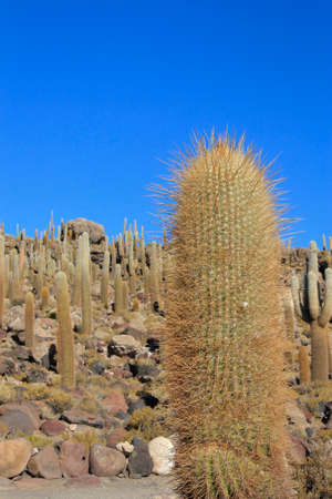 incahuasi: Isla Incahuasi or Cacti island in the middle of Salar de Uyuni, the worlds largest salt flat Stock Photo