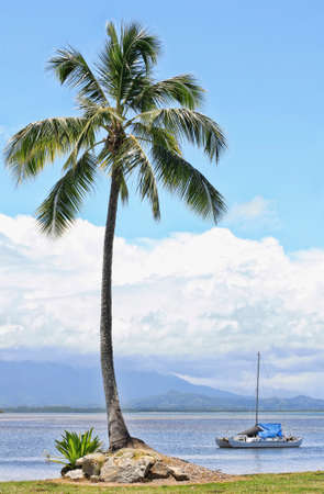 port douglas: Port Douglas inlet with a single palm tree and yacht