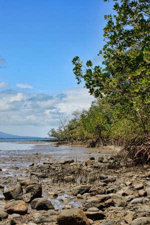 port douglas: a view of Port Douglas mangroves on the foreshore
