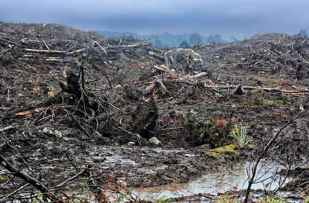 the destruction of our environment by cutting of the trees