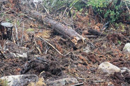 die Zerstörung unserer Umwelt durch den Fällen von Bäumen