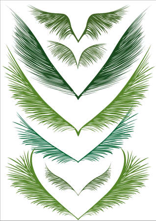 fronds: a set of green palm fronds on white background
