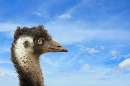 emu: una cabeza de emú con el cielo en el fondo Foto de archivo