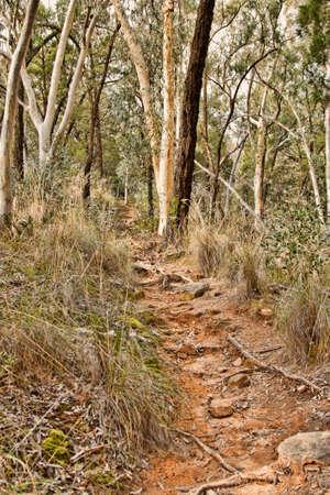 buisson: Photo de Bush austral en fin d'après-midi