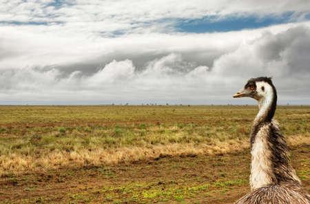 flightless: arid outback Australia after a little rain