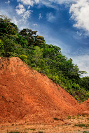 Vertical view of slope of red ground and many green trees on the edge of rainforest. Copy space