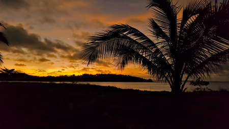 cairns: Silhouette of beach and coconut tree in Queensland Australia