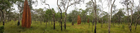 huge tree: outback Australia with huge Cathedral termite mounds Stock Photo