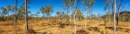 outback Australia in the dry season panorama view
