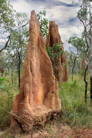 A  giant termite mound in Northern Australia Stock Photo