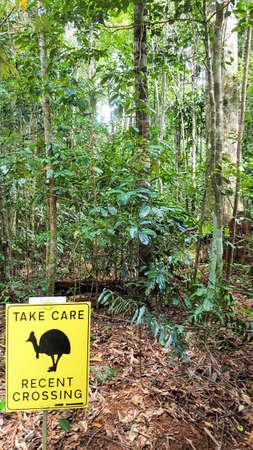 ヒクイドリ ケアンズ近くオーストラリア熱帯雨林サインインを世話します。