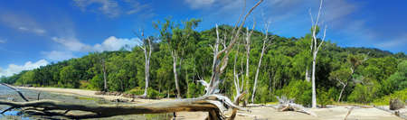 beach near Cairns Australia with the tide out and driftwood on the beach