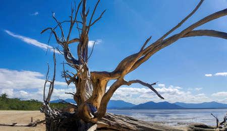 drift wood on the beach near Yarrabah looking towards Cairns Australia Stock Photo