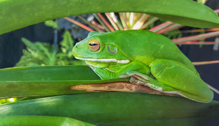green frog camouflaged in garden plants Stock Photo