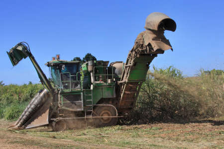 Cairns view of  cane harvester getting ready to cut sugar cane Stock Photo