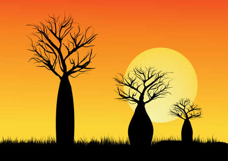 Three silhouette Boab trees  with moon  in background