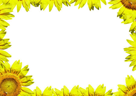 a bright yellow sunflower border to use as a postcard or notepad Reklamní fotografie - 103835552