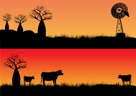 three cows in the sunset and outback wind mill silhouette