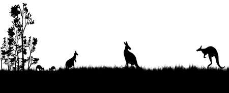 silhouette of kangaroos koala and trees in Australia