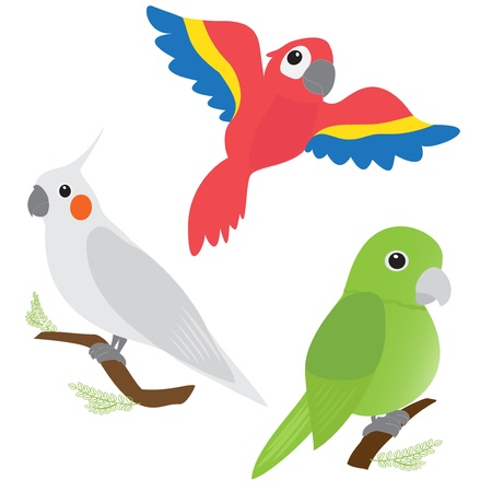 african grey parrot: Set of cartoon parrots - macaw, corella, amazon