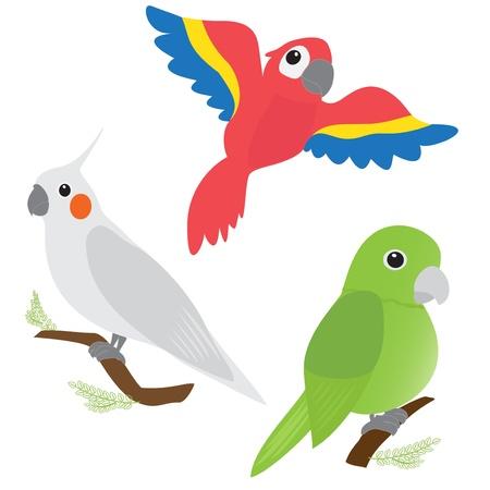 Zestaw papug kreskówek - ara, Corella, amazon