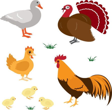 Farm animals vector set 4 Stock Vector - 17565674