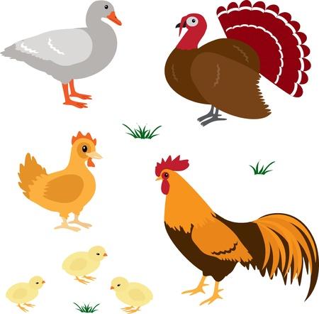 Farm animals vector set 4