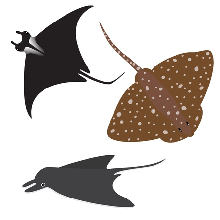 Collection of vector stingrays isolated on white Vector