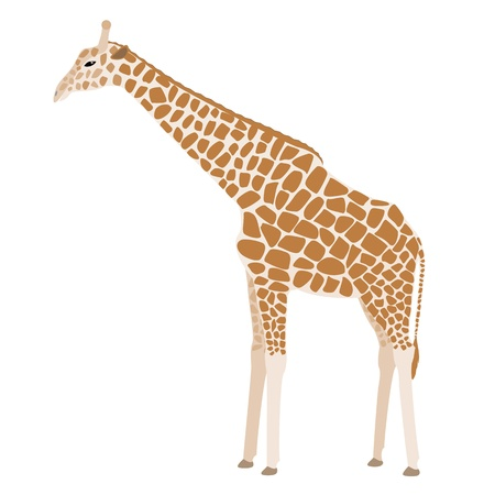 camelopard: Brown cartoon giraffe isolated on white