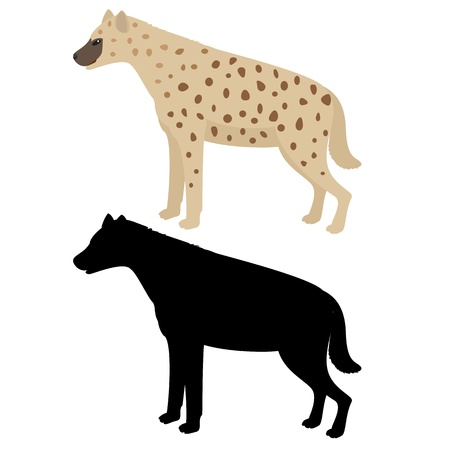 Vector illustration of hyena isolated on white Vector