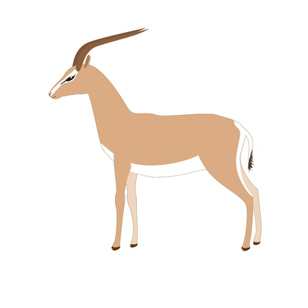 Vector gazelle isolated on white