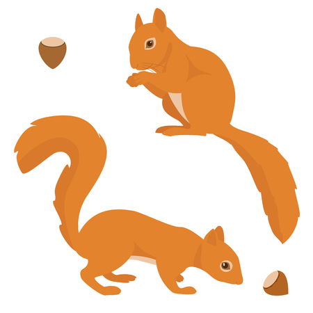 red squirrel: Two vector squirrels isolated on white background Illustration