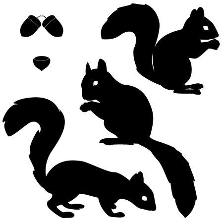 고립 된: 흰색 배경에 고립 된 다람쥐 실루엣의 집합