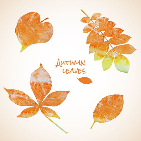 water chestnut: Colorful set of watercolor grunge leaves silhouettes Illustration