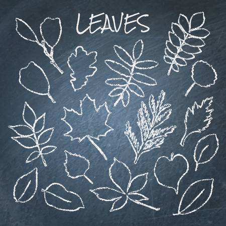 Collection of chalk leaves Illustration
