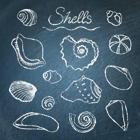 cockleshell: Collection of hand drawn shells on chalkboard Illustration