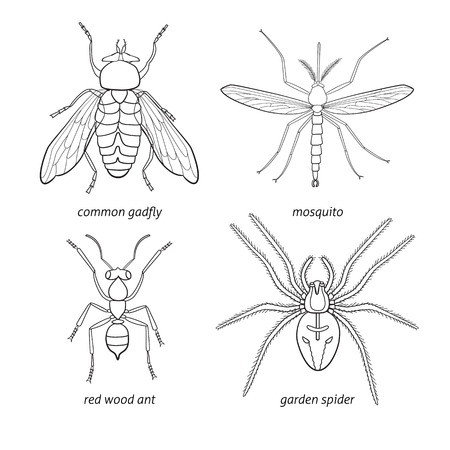 infect: set of insects - gadfly, mosquito, spider, ant Illustration